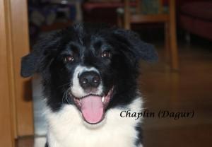 Chaplin  halbes Jahr