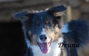 Druna
