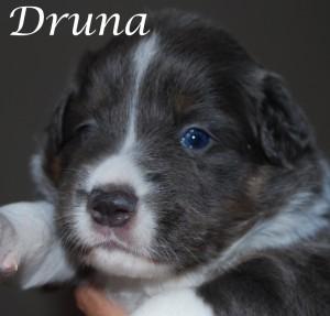 Druna3wo